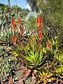 Gardenology.org-IMG 2571 hunt0903.jpg