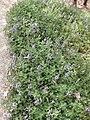 Gardenology.org-IMG 5145 hunt0904.jpg