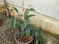 Gardenology.org-IMG 7641 qsbg11mar.jpg