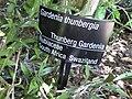 Gardenology.org-IMG 9349 rbgm10dec.jpg