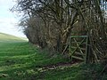 Gateway to Deep Dale Woods, above North Dalton - geograph.org.uk - 725351.jpg