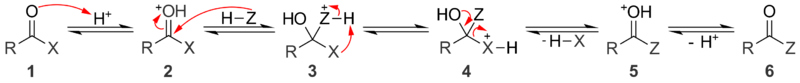 A general mechanism for acid catalyzed nucleophilic acyl substitution