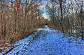 Gfp-missouri-weldon-springs-snowy-forest-path.jpg