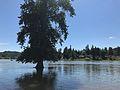 Gladstone, Oregon (33918854734).jpg