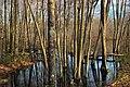 Grass Lake (Revisited) (9) (17175110930).jpg