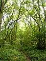 Gravelly Wood - geograph.org.uk - 250381.jpg