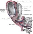 Реканализация пупочной вены