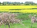 Green Belt, Felthamhill - geograph.org.uk - 785517.jpg