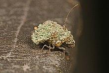 picadura de insecto carga basura