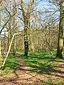 Grinders Wood in Wiston, West Sussex.jpg