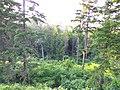 Gryshko Botanical Garden (May 2019) 08.jpg