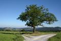 Guentersberg Wasserkuppe Tree Road Fork.png