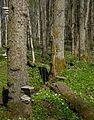 Gullmarsskogen nature reserve.jpg