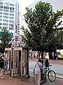 HK CWB 銅鑼灣 Causeway Bay 東角道 East Point Road near SOGO n 駱克道 Lockhart Road shops April 2020 SS2 08.jpg