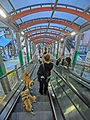 HK SYP Centre Street evening Escalators interior black clothing visitor Dog owner walking Mar-2014 001.JPG