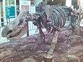 HK WoollyRhino Skeleton.jpg