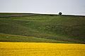 Hackpen Hill, Wiltshire, England, 23 April 2011 - Flickr - PhillipC (3).jpg