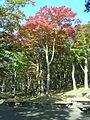 Hakone Ashinoko lake dsc05422.jpg