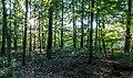Haltern am See, Seebucht Hohe Niemen -- 2014 -- 1142.jpg