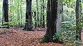 Hambacher Wald - Merzenicher Erbwald bei Morschenich 2018.jpg
