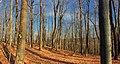Hemlock Ridge Preserve (9) (13810762514).jpg
