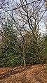 Highgate Wood 20170330 150010 (49400917956).jpg