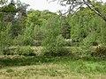 Hinton Park, lake - geograph.org.uk - 1295589.jpg