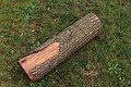 Holzgreifzange 1 0129.jpg