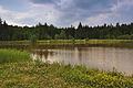 Horní rybník u obce Suchý, Velenov, okres Blansko (05).jpg