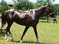 Horse 1100114.jpg