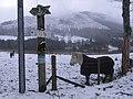 Horse in snowy field at Balquhidder - geograph.org.uk - 677815.jpg