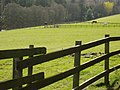 Horses near Yarrowford - geograph.org.uk - 161434.jpg