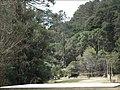 Horto Florestal. - panoramio (4).jpg