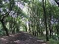 Howden Clough - geograph.org.uk - 31037.jpg