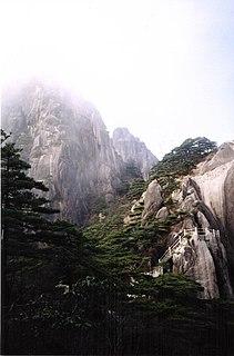 species of plant, Huangshan Pine