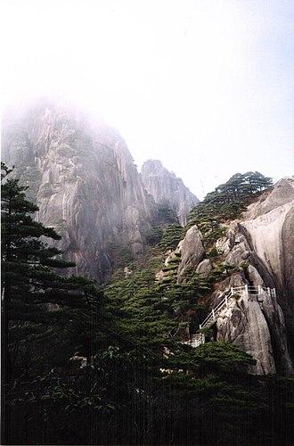 Pinus hwangshanensis - Huangshan pines on the Huangshan Mountains, Anhui