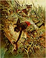 Hunting and trapping stories; a book for boys (1903) (14780096414).jpg