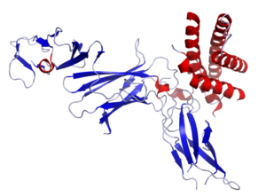 Interleukin 12 - Image: IL12 Crystal Structure.rsh