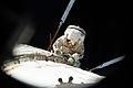 ISS-36 EVA-5 (e) Alexander Misurkin.jpg