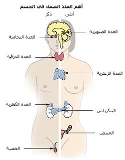 بحث عن جهاز الغدد الصم