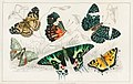 Illustration from A History of the Earth and Animated Nature by Oliver Goldsmith from rawpixel's own original edition of the publication 00111.jpg