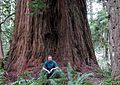 Iluvatar redwood 400.jpg
