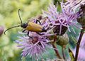 Insecte 130702.jpg