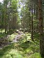 Into The Forest - geograph.org.uk - 519099.jpg