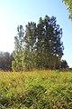 Iskitimsky District, Novosibirsk Oblast, Russia - panoramio (24).jpg