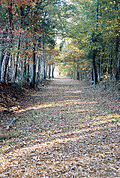 Island Ford Road is one of the many original Colonial road beds that cross various trails throughout the park