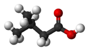 Ball-and-stick model of 3-methylbutanoic acid
