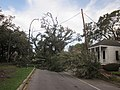 Issac Carrollton St Charles Closed By Trees.JPG