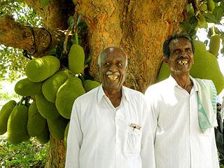 Jackfruit, kalpavriksha