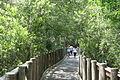 James E. Grey Preserve boardwalk.jpg